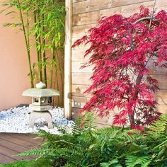 10 Tips for Landscaping Around Trees   Family Handyman   The Family Handyman