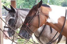 Horse faces Hacienda Ario, Santa Teresa Costa Rica #fun #horseback #horse #nature