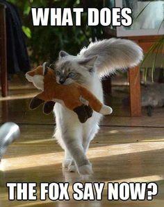 take that foxy