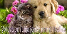 Helmiä elämäni ketjuun: lokakuuta 2014 Friendship Day Wallpaper, Happy Friendship Day Images, Funny Animal Pictures, Funny Images, Funny Animals, Psalm 91, Dog Toys, Best Dogs, Cute Dogs
