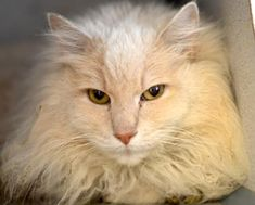 3 / 28   ***SENIOR*** Petango.com – Meet Heinz, a 8 years 1 month Angora / Mix available for adoption in PITTSBURGH, PA Contact Information Address  6620 Hamilton Avenue, PITTSBURGH, PA, 15206  Phone  (412) 345-7300  Website  http://www.animalrescue.org/  Email  adoptions@animalrescue.org