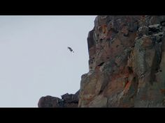 BBC's Life Story features one of the most intense moments I have ever seen in a documentary: these barnacle goslings diving over from their nest on a cliff top to reach their parents down below. Magic Eyes, Baby Chicks, Wild Ones, Nature Images, Funny People, Cliff, How To Introduce Yourself, Diving, Earth