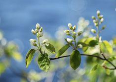 Kuvia neljästä vuodenajasta: Valkoinen Plants, Plant, Planets
