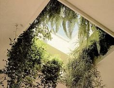 skylight with plants around it. pretty! would look nice with bright flowers also