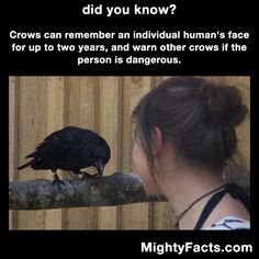 They also teach their offspring so they know who is and isn't a danger. It becomes generational information. Crow Facts, Raven Facts, Wtf Fun Facts, Funny Facts, Funny Animals, Cute Animals, Did You Know Facts, Science, Animal Facts