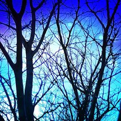 Blue, white, aqua and black bare branches digital art. Instacanvas