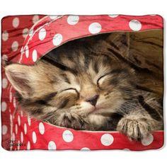 "American Heritage Wilderness Collection Featuring Greg Cuddiford's ""Kitten in Polka Dot Box"" 50"" x 60"" Royal Plush Raschel Throw - Walmart.com"