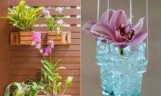 Orquídeas para o outono.