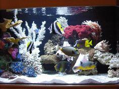 Large Community Saltwater Aquarium