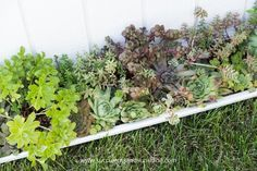 Did you know succulents need fertilizer? Find out how to fertilize your succulents in this post! Choosing a fertilizer specifically for succulents is extremely important. This post covers the best options for succulent fertilizer. Succulent Fertilizer, Propagating Succulents, Succulent Care, Succulents Garden, Herbs, Landscape, Green, Flowers, Plants