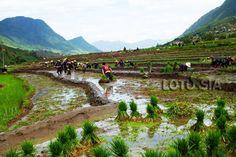 Trek Sapa est la meilleure facon de déouvrir les villages d'ethnie et d'apprendre la culture local.