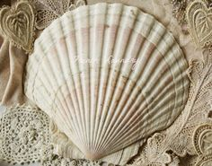 Shell and lace from French Laundry