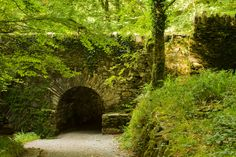 Landscape inspiration for the story. - the Tagrasse Forest. (Image from Dreamstime)