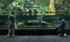 Aquário de Berlim, aquário plantado para jumbos by vincenzo di nuzzo