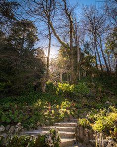 """Secret Garden"" #portugal #sintra #quintadaregaleira #garden #portugal_em_fotos #portugalframes #portugalalive #portugal_de_sonho #portugal_lovers #portugaldenorteasul"