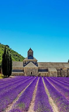 Amazing Lavender field, Provence, France