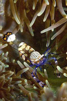 Underwater wonders of Menjangan island, North Bali