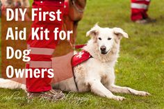 DIY First Aid Kit for Dog Owners