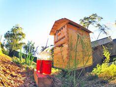 #Honey on Tap Directly From Your #Beehive - #iCreatived