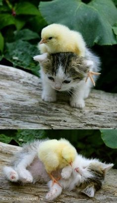 Turns out, love knows no bounds in the animal world as well.