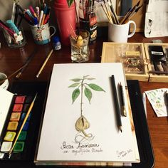 Botanic illustration of Avocado, Mixed Media, Drawings, Illustration, Instagram Posts, Artwork, Painting, Work Of Art, Lawyer