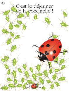 La coccinelle par Gallimard Jeunesse