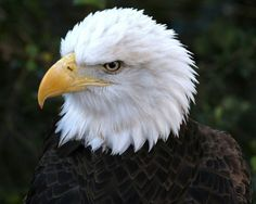 ||• The Eagle is one of God's mosr trusted & strongest animal he has ever created •||
