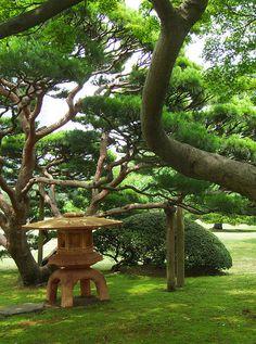 Lantern and pines - Tokyo, Japan