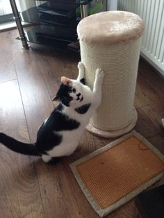 Oscar's favourite scratching post