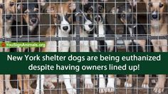 NY shelter dogs are euthanized despite having owners lined u... - Care2 News Network