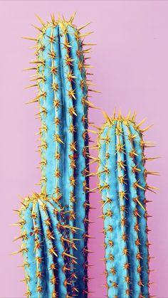 New wallpaper android art illustration backgrounds ideas – Cactus Trendy Wallpaper, New Wallpaper, Screen Wallpaper, Cute Wallpaper Backgrounds, Tumblr Wallpaper, Cute Wallpapers, Phone Backgrounds, Iphone Background Wallpaper, Aesthetic Iphone Wallpaper