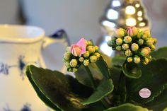 Bing & Grøndahl, - flowers - blomster - Havets Sus