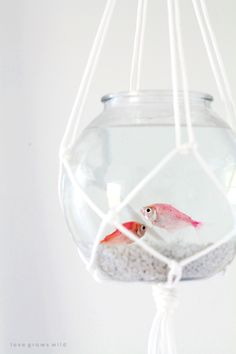 5 Clever Ways To Create A Beautiful Fish Bowl