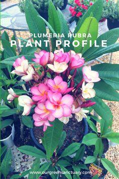 Plant Species, Flowering Trees, Green Leaves, Tropical, Backyard, Profile, Medium, Tips, Flowers