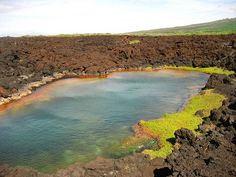 Pools search and google search on pinterest for Fish bowl maui