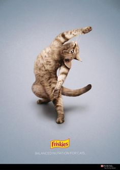 This cat exercises more than I do. #cats #marketing