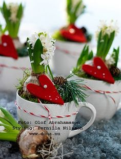 Hyacinth Teacup Display