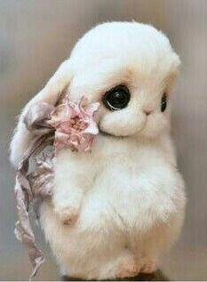 Awww! Sweet, bashful stuffed bunny rabbit. Cute Baby Pigs, Baby Animals Super Cute, Cute Baby Bunnies, Cute Stuffed Animals, Cute Little Animals, Cute Funny Animals, Baby Animals Pictures, Cute Animal Pictures, Felt Animals