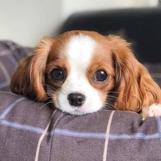Things that make you go AWW! Like puppies, bunnies, babies, and so on. Cute Baby Dogs, Cute Little Puppies, Cute Dogs And Puppies, Cute Little Animals, Cute Funny Animals, Pet Dogs, Adorable Puppies, Doggies, Beautiful Dogs