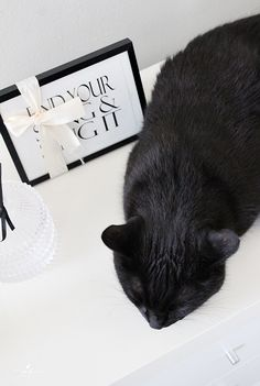 Stadin kolli black cat musta kissa