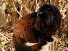 """Am zweithäufigsten registrierte die Tierschutzorganisation TASSO den Namen """"Luna""""    www.einfachtierisch.de"""