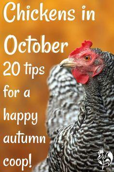 Portable Chicken Coop, Best Chicken Coop, Chicken Coop Plans, Building A Chicken Coop, Chicken Coops, Chicken Houses, Chicken Life, Chicken Feed, Best Egg Laying Chickens