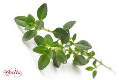 Θυμάρι: εξολοθρεύει τα μικρόβια σε λιγότερο από μία ώρα!! Oras, Small Gardens, Parsley, Home Remedies, Herbalism, Plant Leaves, Essential Oils, Food And Drink, Health