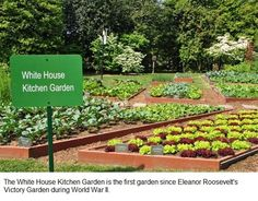 The Potting Shed - A gardener in the White House - Life - Press and Guide