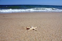 Cape Cod: Starfish at Cape Cod National Seashore by Chris Seufert, via Flickr
