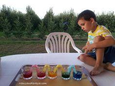 Manzanaterapia: Experimentos con el agua: capilaridad multicolor