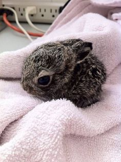 "Here's a tiny bunny who wants to cuddle up with you. | Community Post: Can You Make It Through This Post Without Going ""AWWWW""?"