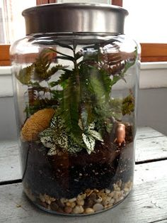 twigs, twine, + thyme: custom terrarium project