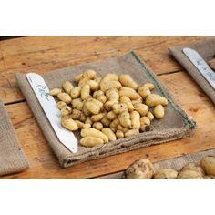 Ratte Potatoes - second earlies