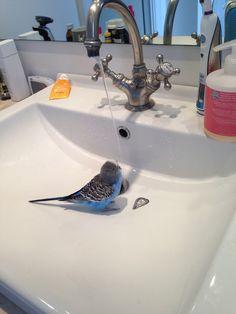 Alberto taking a bath